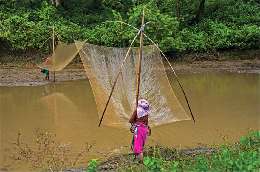 Lift-net fishing is very simple and far more lucrative th...