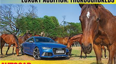Luxury: Horsepower vs horse power video